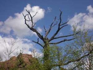 Vlčí kámen - pohled na vrchol